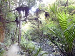 Whangarei Waterfalls