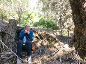 Hobbit Hideout on Mt Victoria