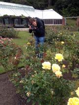 Wonderful motifs in rose gardens