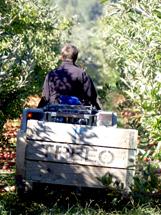 tractor driver Michael