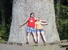 800 year old Kauri and us