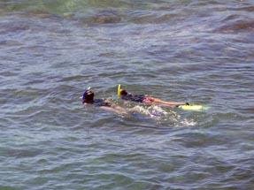 Snorkelling people