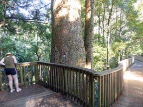 Bianca tree top walk