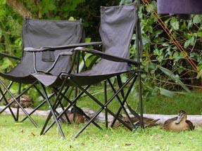Ducks sitting campingchair