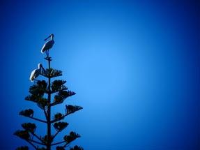 Spoonbills in the sunshine
