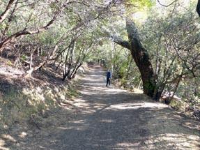 Walking path around Mount Vic