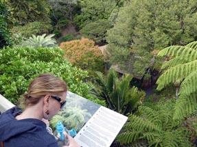 Bianca sign vegetation