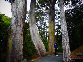 Giant trees Botanical garden