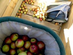 our buckets lying in the bin