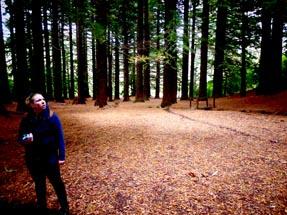 Bianca gazes at the big trees