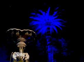 Enlightened palm tree Napier