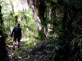 Walk bush Morere Thomas