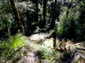 staircase in the bush