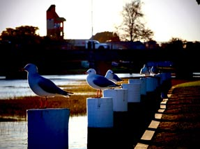 Seagulls on the poles