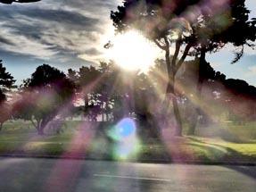 sun reflexions trees