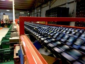 Belt sorting machine