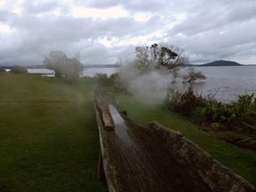 Tree Steam