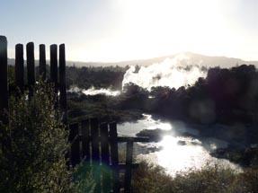 Scenery Whakarewarewa
