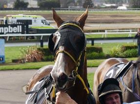 Horse Rotorua