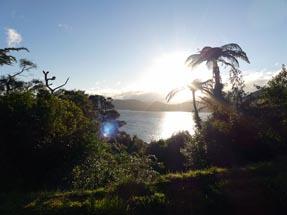 Sunshine Te Urewera
