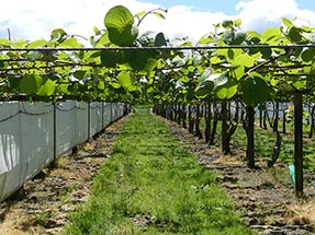 Kiwi Orchard from the front