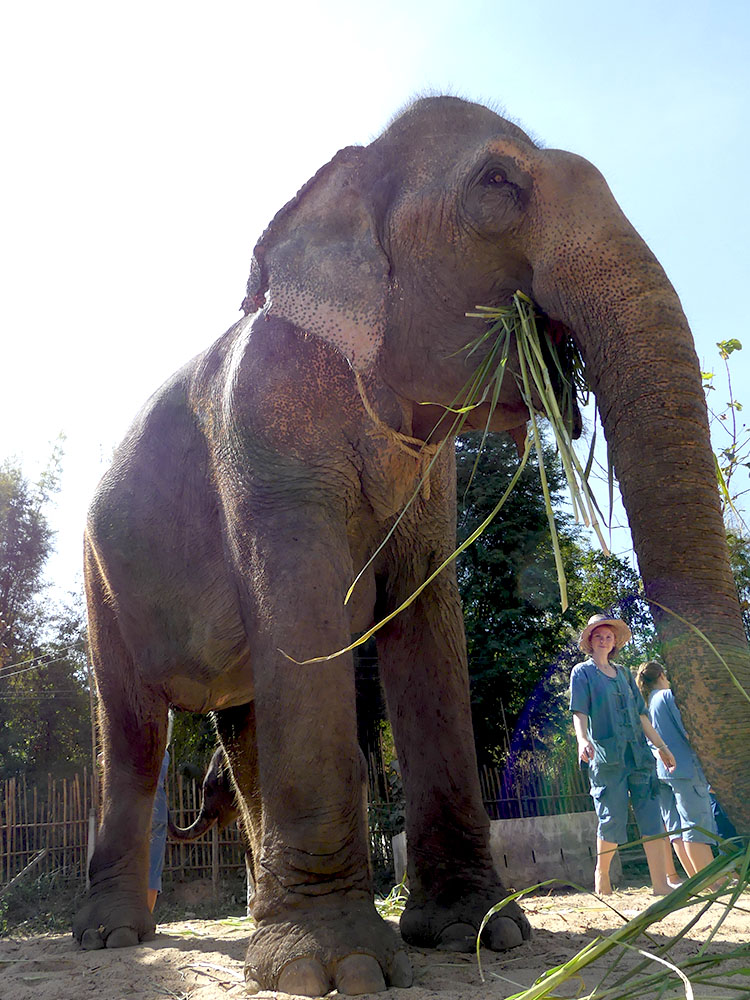 MaeRim Elefanten Reservat
