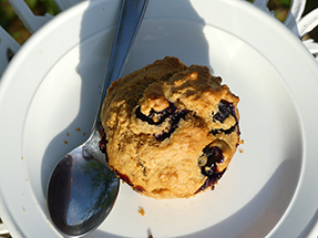 Blueberry muffin birds eye